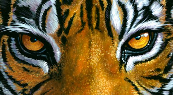 occhi-della-tigre-avanti-italia
